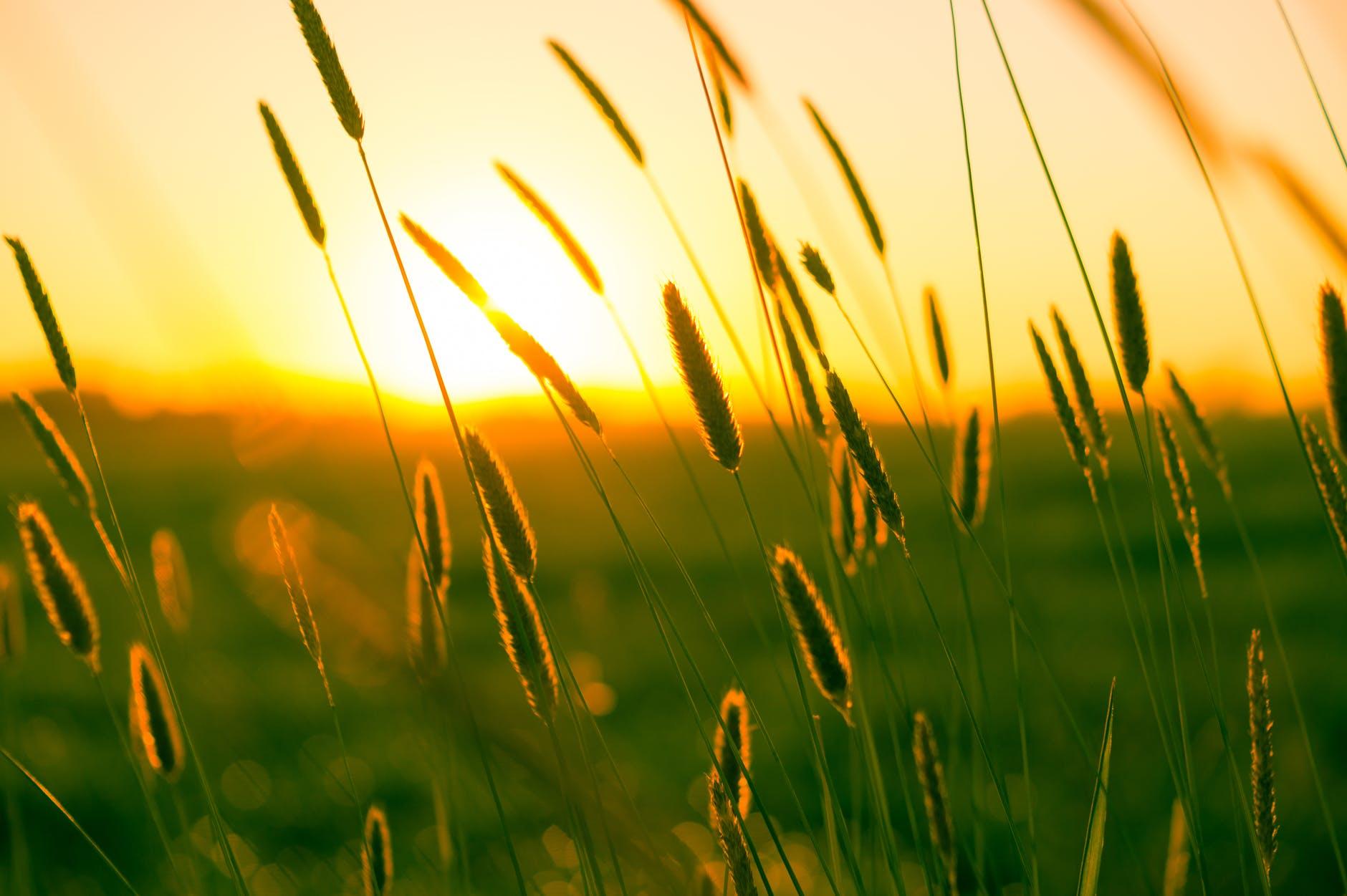 chaleur champ clairiere coucher de soleil